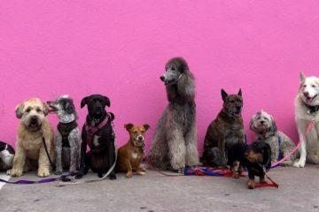 Hundestartups Haustierstartups hannah-lim-708852-unsplash